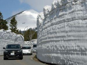 開通したゴールドラインで、雪の回廊を楽しみながら通行する一般車両=1日午前9時40分、睡蓮沼付近
