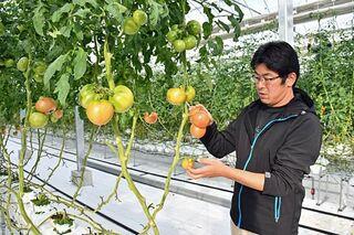 【岩手・盛岡】トマト生産 コンピューター制御/最適環境で通年収穫