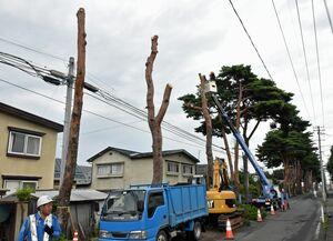 伐採が進む南小学校通学路の松並木=17日