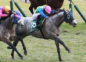 2月のダイヤモンドステークスで、天皇賞への切符をつかんだミライヘノツバサ(右)(JRA提供)