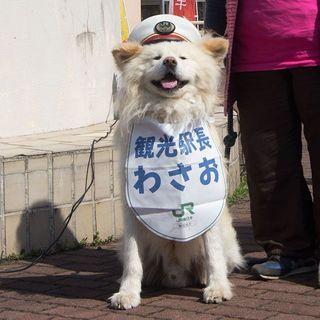 5年目の駅長 and more...