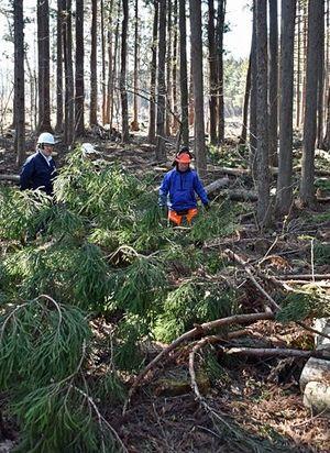 切った木が受講者に当たり死亡する事故が起きた野辺地町の現場=16日午後