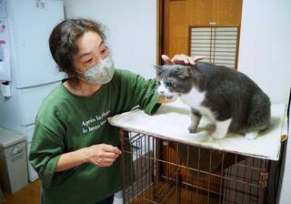 「スクランブル」保護犬猫、障害者癒やし