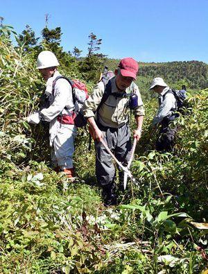 櫛ケ峰分岐近くに生い茂ったササを刈り、登山道を確保する参加者=13日