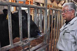 三戸・田子牛を見詰める井畑代表取締役。「地元銘柄牛が世界に知られる好機」と輸出を喜ぶ=3日、田子町の三戸畜産農協施設