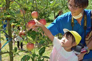 南部町の観光リンゴ園オープン 園児丸かじり