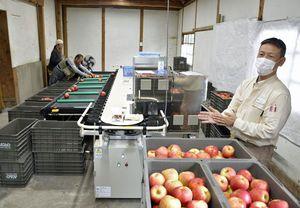 光センサーで糖度や果実の内部障害、大きさ、色を計測できる選果機について説明するヤンマーアグリジャパンの担当者