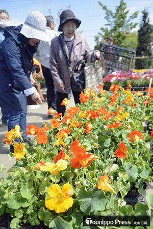 色とりどりの花を品定めする来場者