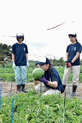 五農生が障害者とスイカ収穫「農福連携」学ぶ
