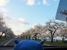 桜満開、春全開っ! スイーツ三昧の1週間報…