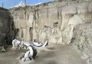 マンモスの骨大量発掘、メキシコ