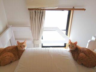 """シンクロする2匹の茶トラの左右からの""""ごはん圧""""に「狛猫?」「鏡ではございませんね?」"""
