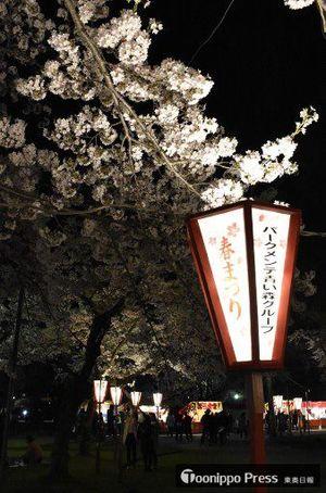 「青森春まつり」で合浦公園に設置されているぼんぼり。年々減少し、夜の園内が薄暗くなっている