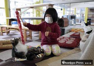 猫の殺処分減少につなげようと県動物愛護センターが設けた「ふれあいねこルーム」