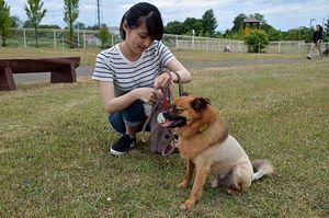 犬の世話をするアイペットの新入社員=6月中旬、青森市宮田の県動物愛護センター