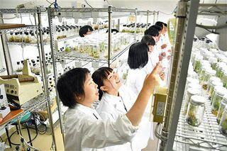 【山形】微生物でソバ収量増を