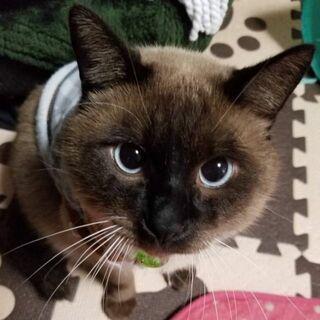 「タヌキ似の捨て猫」が流れついた先は? 保護猫活動にも影落とすコロナ禍
