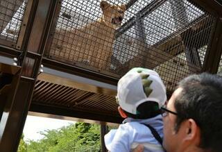 子ライオン2頭が仲間入り、愛知