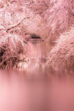 特選に輝いた中畑さんの「染まる冬」