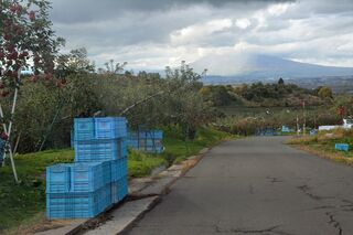 リンゴ盗難「野積みしない」「対策限界ある」