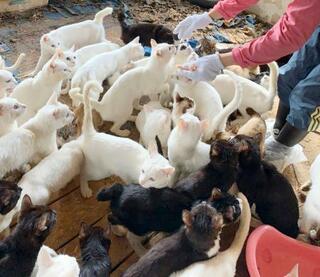 一軒家で猫238匹保護、札幌