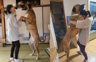 飼育放棄された大型犬、保護されても安心して託せる里親がいなかった…住居を改築して引き取った飼い主の思い