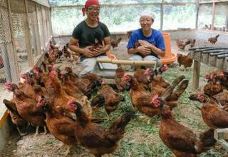 和歌山・竜神で新鶏開発