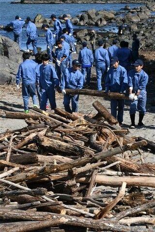 蕪島をきれいに、高校生が台風の流木を撤去