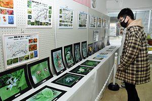小原さんが撮影した創造の森で見られる植物の写真を展示しているしちのへまちなかギャラリー
