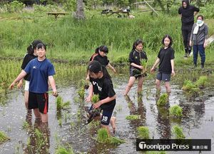 もち米の苗を植える子どもたち