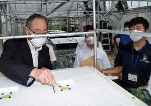 町田式水耕栽培の播種槽にメロンの種を植える福島市長(左)