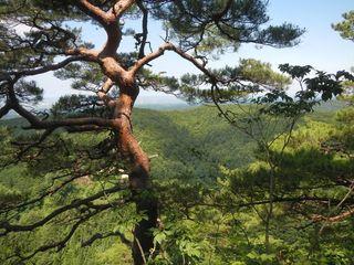 松倉神社・梵珠大滝めぐり  キャニオンが見…