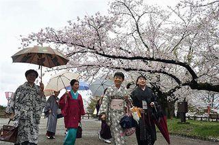 和服姿で桜を堪能 弘前公園でウォークイベント