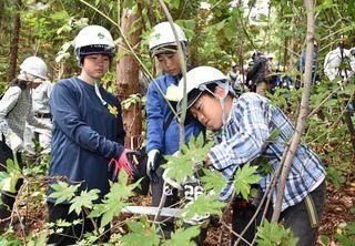 のこぎり手に汗だく/鯵ケ沢・西海小児童が林業体験
