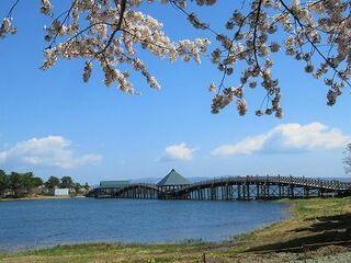 鶴田町 鶴の舞橋と桜